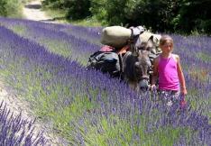 Les cols des ânes à la ferme de Pierre Vieille dans la vallée de l'Oule