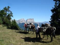 Itinérance sur les hauts plateaux du Vercors avec des mules