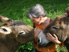 Âne à Malix association d'âne de bât