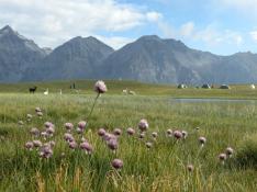 La Joie de Vivre - Randonnées avec des lamas