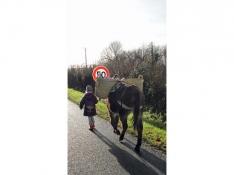 Au pas des ânes avec Le Petit Cob