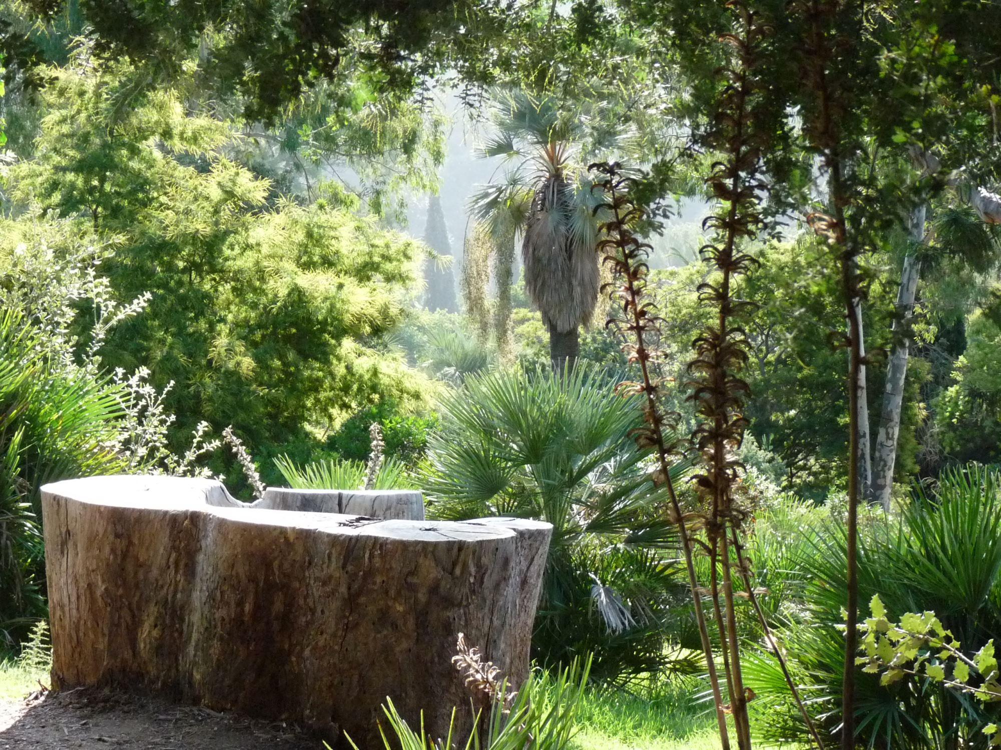 Domaine du rayol le jardin des m diterran es sorties for Jardin rayol canadel