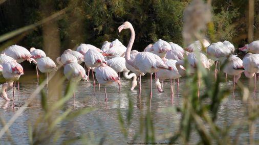 A nous l'automne : les grandes migrations